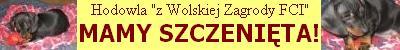 Jamniki z  Wolskiej Zagrody FCI